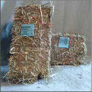 Hay - Mini Bales and Cubes