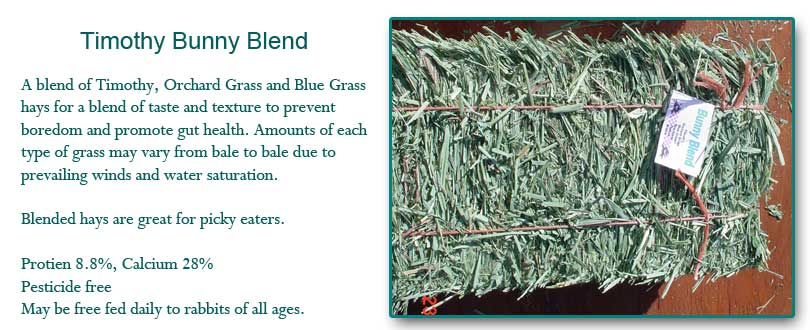 Timothy Blue Bunny Grass Hay